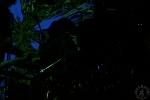 jazzkbild_2011-06-18_21-24-52-1368