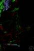 jazzkbild_2011-06-18_21-34-39-0980